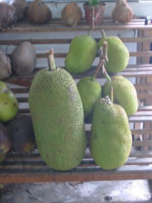 Chempedak (not Durian)